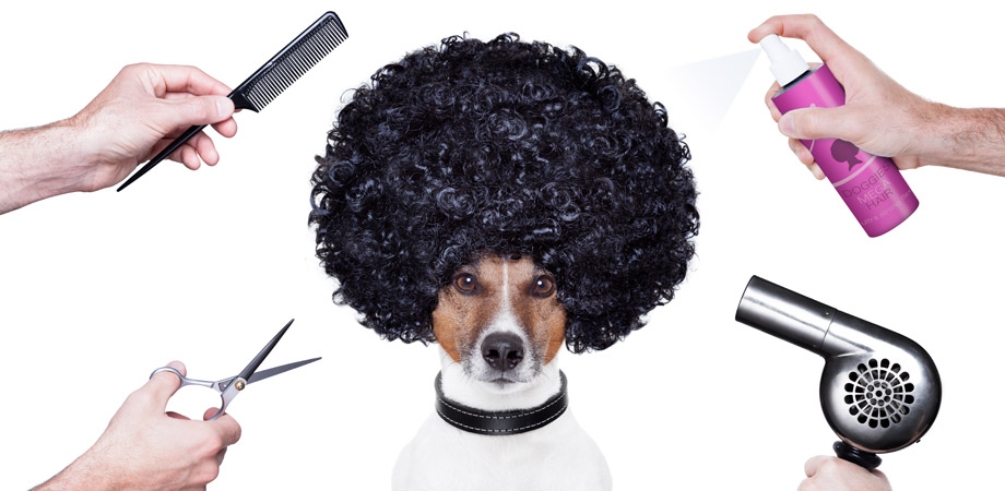 Pooch Perfect Dog Grooming in Guildford