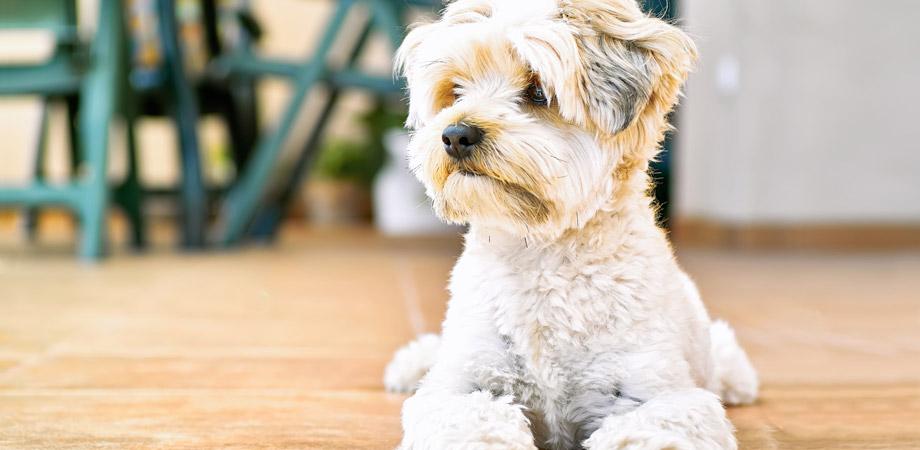Dog Grooming Testimonials Surrey