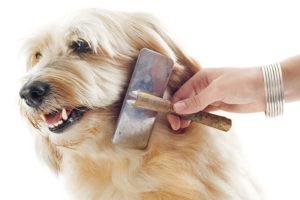 Dog Grooming in Bramley, Guildford