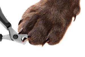 Dog nail clipping in Surrey