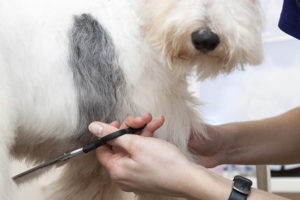 Dog Trimming in Guildford, Surrey
