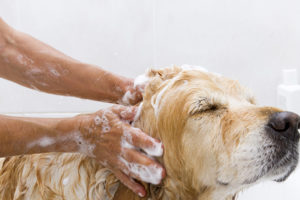 Dog Washing in Guildford